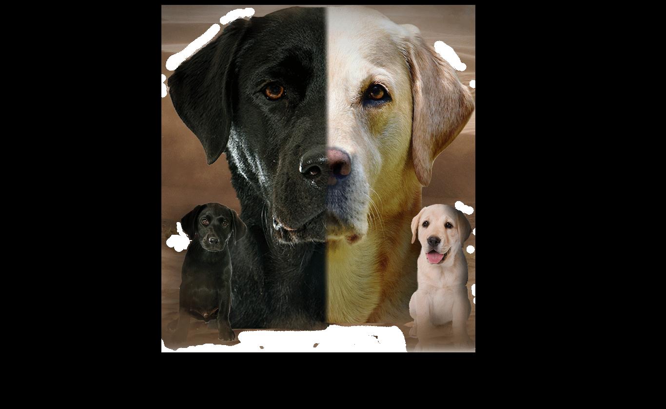 Hunde frei 2