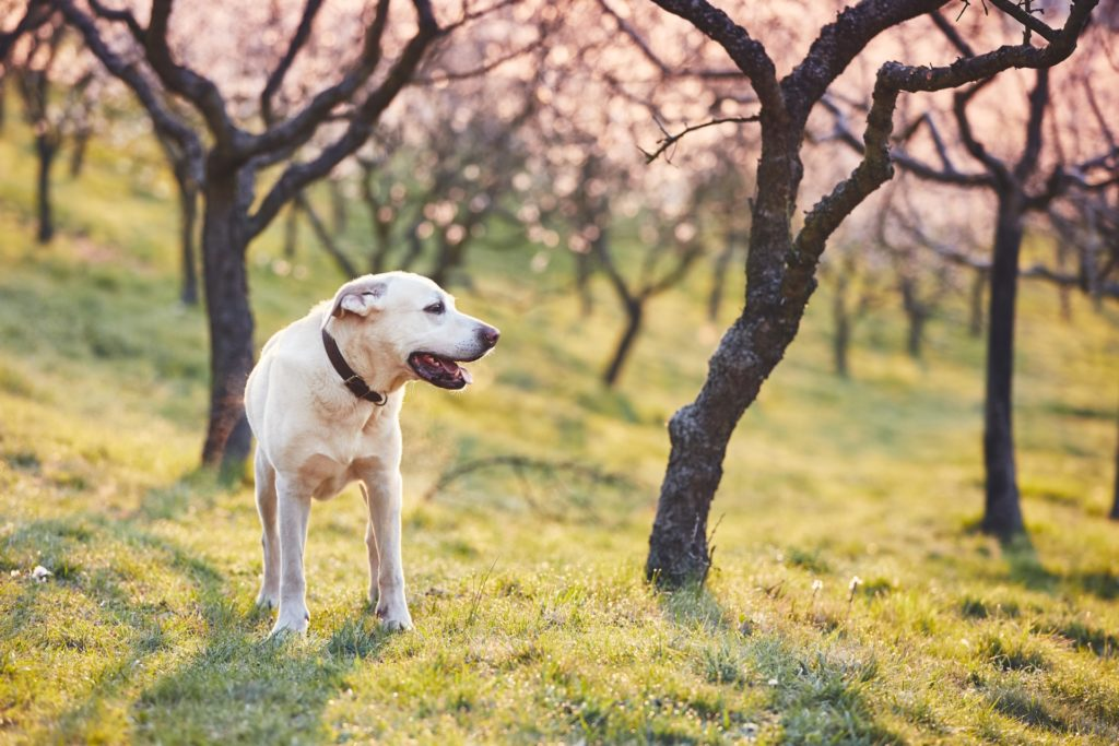 dog in spring nature PB93DFP