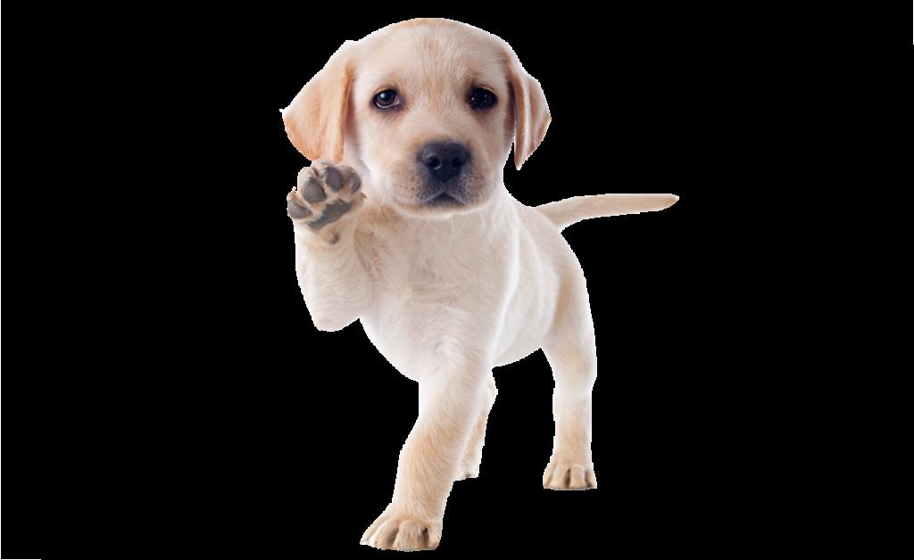 hund 4 133